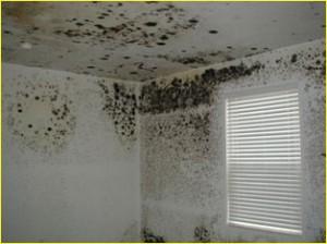 dus geen overvolle slaapkamer en dat soort dingen zwarte schimmel van muur verwijderen klik op de afbeelding om de link te volgen